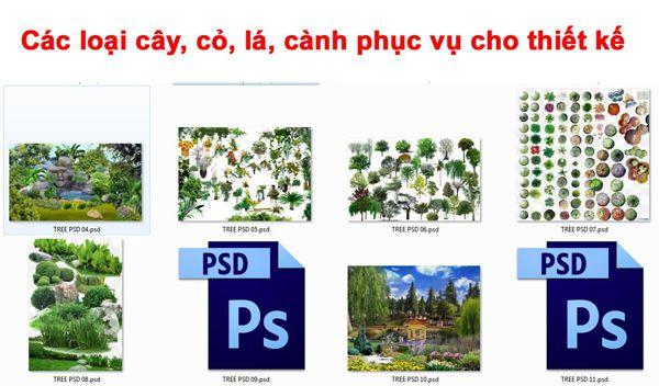 [PSD] Các loại cây, cỏ, lá, cành phục vụ cho thiết kế